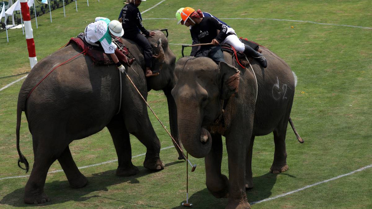 King's Cup elephant polo tournament kicks off in Bangkok