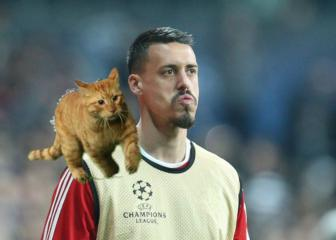 Cat pitch invader voted Bayern man of the match