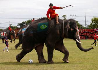 Elephants kick-off World Cup fever in Thailand