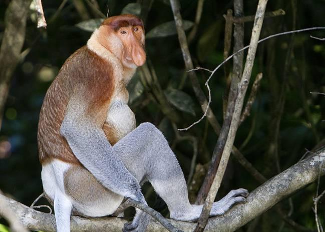 Estos Son Los Animales Más Feos Del Mundo Según La Asociación Que
