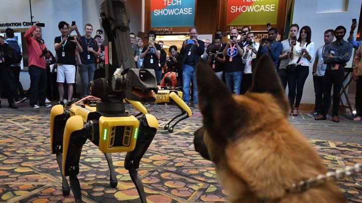 c4a3df11a El robot-perro de Boston Dynamics que tanto nos asustaba se cae en su  presentación
