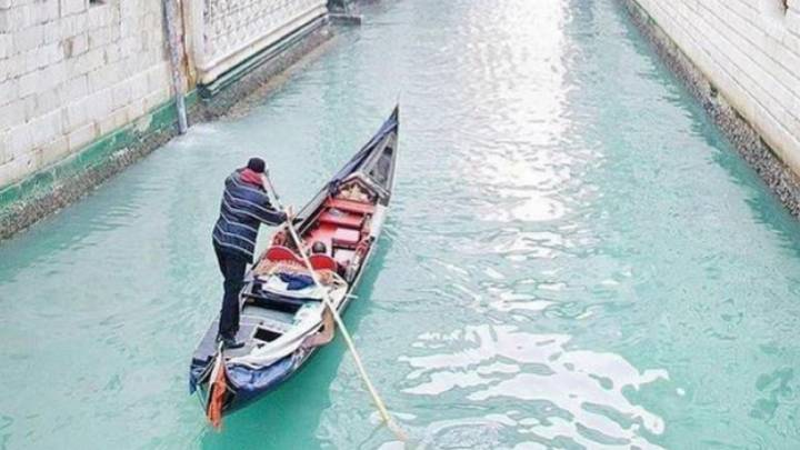El agua de los canales de Venecia se limpia y vuelve la fauna a ...
