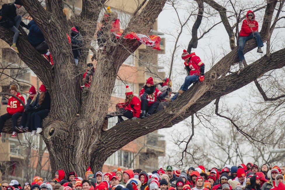 Seguidores subidos  los árboles para tener una mejor vista del Desfile de la Victoria de los Kansas City Chief