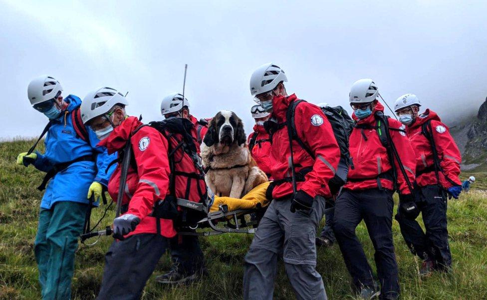 Un grupo de rescatadores ingleses transportan en camilla a un perro San Bernardo después de rescatarlo en una de las montañas más altas de Inglaterra, el Sca Fell.