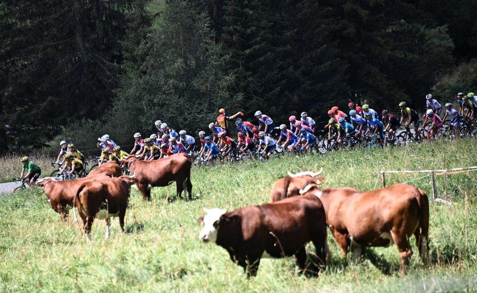 La pelotón de ciclistas sube durante la cuarta etapa de la 72a edición de la carrera ciclista Criterium du Dauphine, 153 km entre Ugine y Megeve el 15 de agosto de 2020