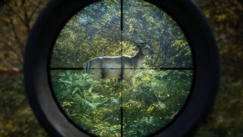 Imágenes de theHunter: Call of the Wild