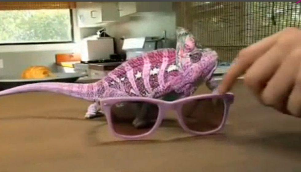 El \'camaleón fashion\' que cambia de color según las gafas de sol ...