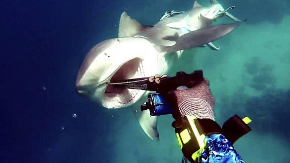 Actriz Porno Es Mordida Por Tiburon una actriz porno es atacada por un tiburón en una filmación