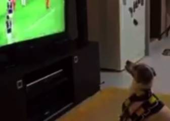 They think it's all Rover: dog celebrates as Fenerbahce score