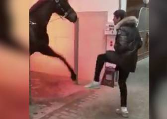 Stop what you're doing and watch Müller dance with a horse