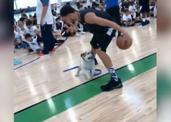 Klay Thompson wows pet dog 'Air' Rocco with his dribbling